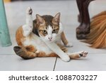 adorable little cat take a... | Shutterstock . vector #1088703227