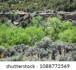 Small photo of Sagebrush, Cottonwoods and Junipers Signs of Spring in the Desert in the Land of Enchantment