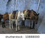 These are donkeys on the steps of santorini that give rides to tourists. - stock photo