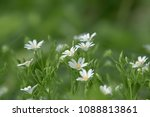 spring flowers in the forest | Shutterstock . vector #1088813861