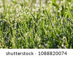 grass texture.soft focus. | Shutterstock . vector #1088820074