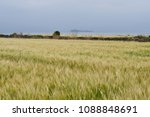 Small photo of The yellow barley field tremble in the breeze. Famer will share the joy of harvesting ripe them in yellow color.