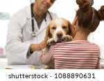 Stock photo close up shot of a cute beagle dog falling asleep during medical appointment at the vet office 1088890631