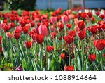 tulips in the moscow landscape... | Shutterstock . vector #1088914664