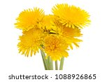 6 bouquet dandelions isolated... | Shutterstock . vector #1088926865