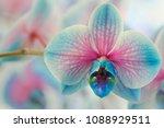 Blue Flowers   Blue Orchids ...