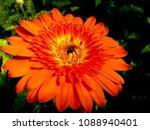beautiful sunflower blossom | Shutterstock . vector #1088940401