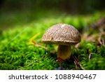 beatiful boletus in woods | Shutterstock . vector #1088940467