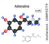 adrenaline  epinephrine  is  a... | Shutterstock .eps vector #1088955779