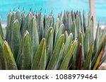 agave victoriae reginae  queen... | Shutterstock . vector #1088979464