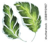 tropical leaves. watercolor... | Shutterstock . vector #1088993987