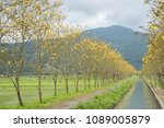 landscape with yellow flower of ... | Shutterstock . vector #1089005879