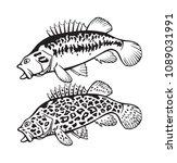 image bass fish   Shutterstock .eps vector #1089031991