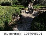 """vegetable garden """"orto dei...   Shutterstock . vector #1089045101"""