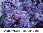macro image of spring lilac... | Shutterstock . vector #1089049181