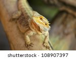 bearded dragon | Shutterstock . vector #108907397