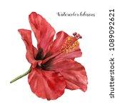 Watercolor Hibiscus. Hand...