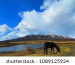 horses in iceland | Shutterstock . vector #1089125924