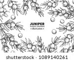 juniper vector drawing frame.... | Shutterstock .eps vector #1089140261