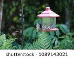 chickadee titmouse songbird... | Shutterstock . vector #1089143021