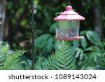 chickadee titmouse songbird... | Shutterstock . vector #1089143024