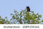 gray heron  ardea cinerea ... | Shutterstock . vector #1089150161
