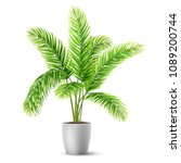 palm tree leaves in a pot. a... | Shutterstock .eps vector #1089200744