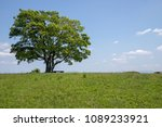 lonely big green tree on the... | Shutterstock . vector #1089233921