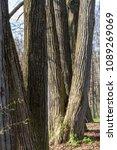 forest spring city | Shutterstock . vector #1089269069