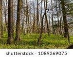 forest spring city | Shutterstock . vector #1089269075
