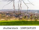 forest spring city | Shutterstock . vector #1089269105