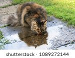 portrait of a cat on the city... | Shutterstock . vector #1089272144