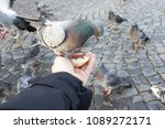 the pigeon sits on a hand of... | Shutterstock . vector #1089272171