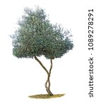 olive tree on white background | Shutterstock . vector #1089278291