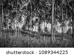 black and white photo of a palm ... | Shutterstock . vector #1089344225