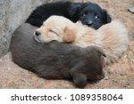 Stock photo trio of puppies 1089358064