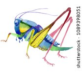 exotic crickets  wild insect in ...   Shutterstock . vector #1089398051