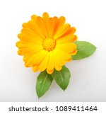 marigold   calendula officinalis   Shutterstock . vector #1089411464