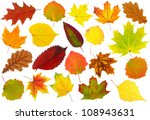Multicolored Leaves. Colorful...