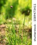 shallow depth of field  only ... | Shutterstock . vector #1089473411