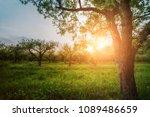 apple garden at sunset  or...   Shutterstock . vector #1089486659