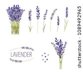 set of lavender flowers... | Shutterstock .eps vector #1089492965
