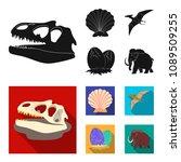 prehistoric shell  dinosaur... | Shutterstock .eps vector #1089509255