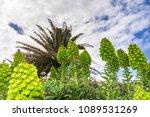 ponta de sao lourenco in...   Shutterstock . vector #1089531269