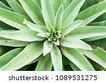 ponta de sao lourenco in...   Shutterstock . vector #1089531275
