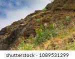 ponta de sao lourenco in...   Shutterstock . vector #1089531299
