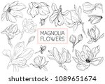 magnolia flowers drawing and... | Shutterstock .eps vector #1089651674