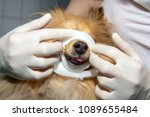 human puts a bandage around the ... | Shutterstock . vector #1089655484