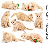 Stock photo collection of cat kitten isolated on white background 108976991