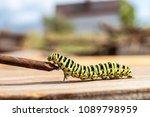 green striped caterpillar... | Shutterstock . vector #1089798959